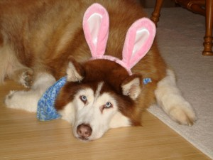 Tasha with Bunny Ears