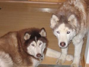 Tasha and Katya